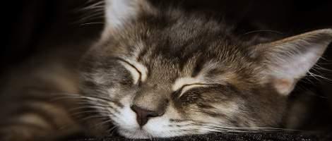 Trucchi per dormire bene e combattere l'insonnia