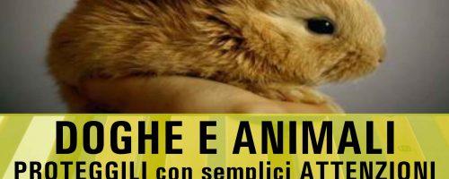 Perché le RETI MOTORIZZATE sono PERICOLOSE per il tuo ANIMALE domestico